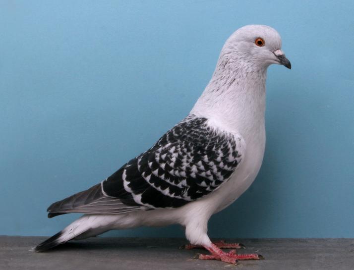 Google pigeon Update 2014