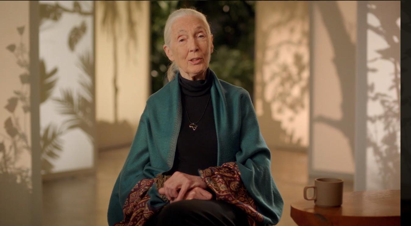 Introduction-Dr-Jane-Goodall-Teache